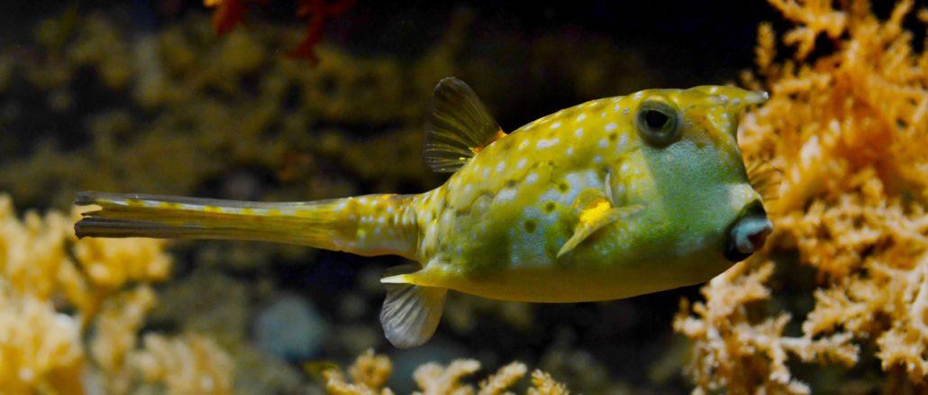 sea-nature-ocean-fish